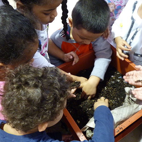 Earth worms at Fairgate Farm
