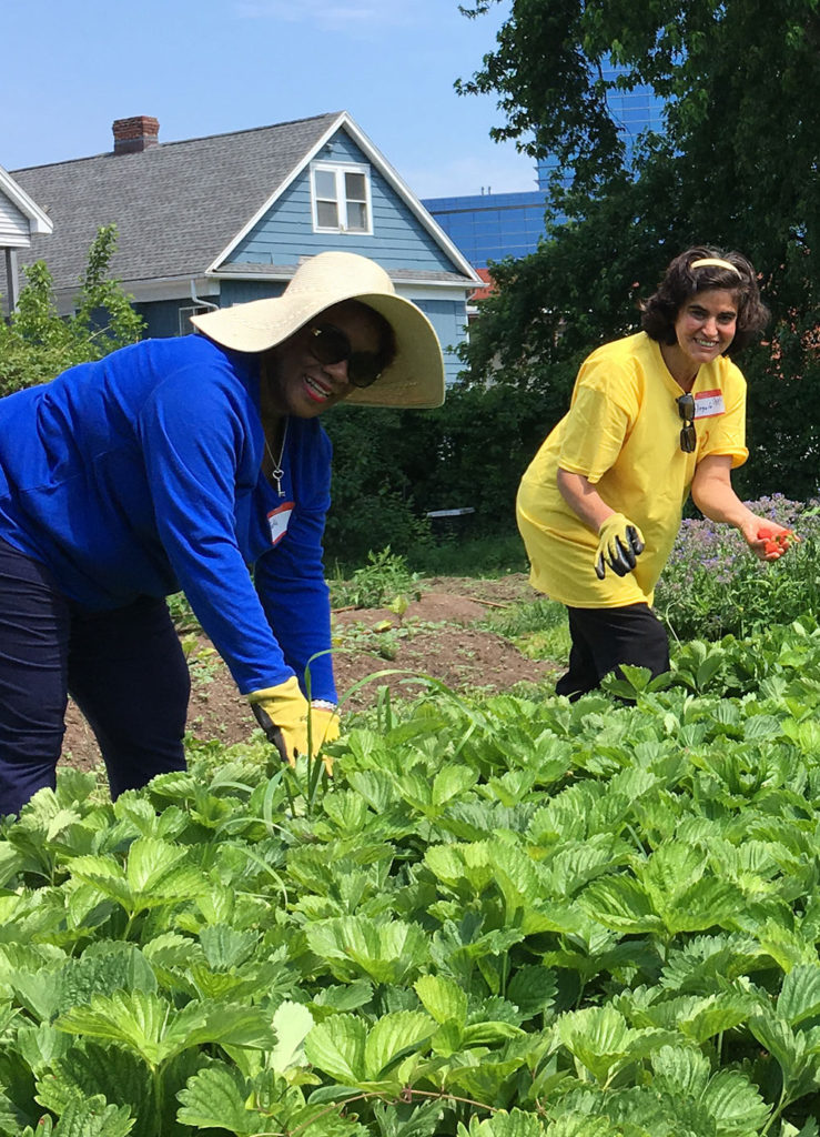 Volunteer at Fairgate Farm