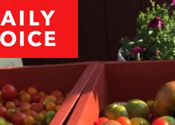 Fairgate Farm featured in Daily Voice