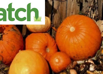 Compost your Pumpkins at Fairgate Farm